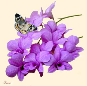 Blommor & fjäril 870.2