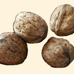 Juglans (nötter) 870.2