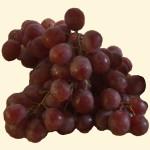 Vitis (röda druvor) 870
